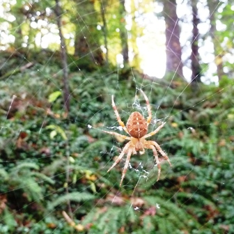 12nov_woodsspider_sm